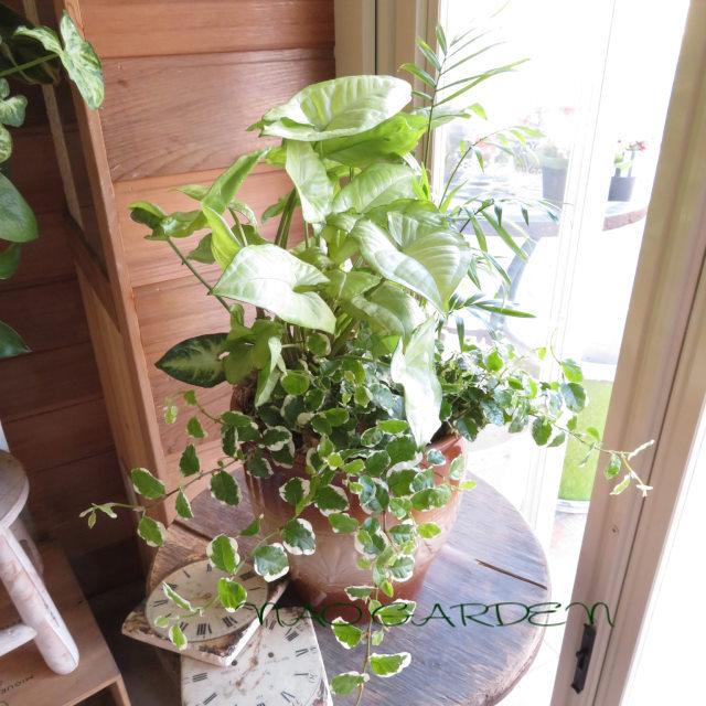0402 ミニ観葉植物おしゃれなインテリア鉢植え★おまかせオーダーメイドB
