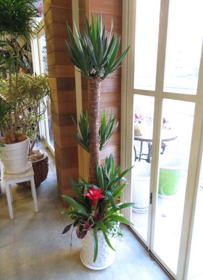 0404観葉植物ギフト ユッカの豪華なミニ観葉ホワイト鉢植え