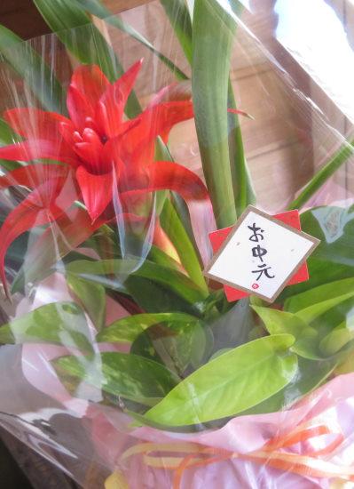 0415観葉植物ギフト お中元におすすめカラフル観葉ラッピング