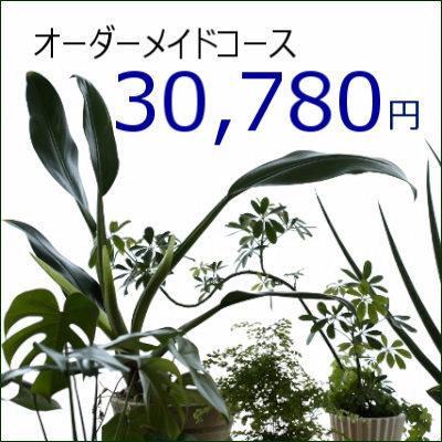 0424【オーダーメイド専用】観葉植物ギフト30,780円コース