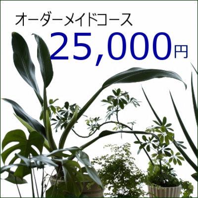 0429【オーダーメイド専用】観葉植物ギフト25,000円コース