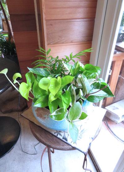 SALE!0430観葉植物ギフト ミニ観葉4(ブルーサークル)