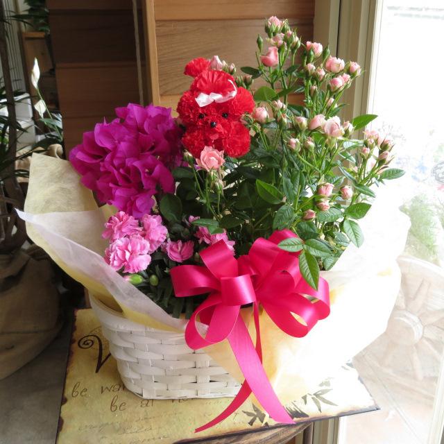 ブーゲンビレアとミニバラの花かご【送料無料母の日ギフト】18md007