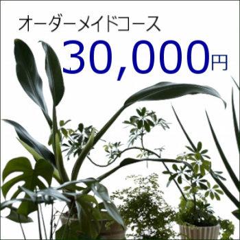 0444【オーダーメイド専用】観葉植物ギフト30,000円コース