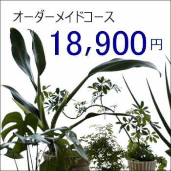 0445【オーダーメイド専用】観葉植物ギフト18,900円コース