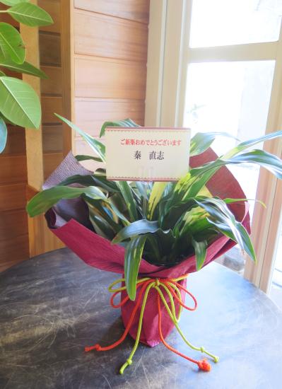 0466観葉植物ギフト 新築の御祝に昔からの縁起もの万年青(おもと)和風ラッピング