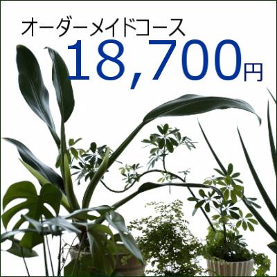 0347【オーダーメイド専用】観葉植物ギフト18,700円コース