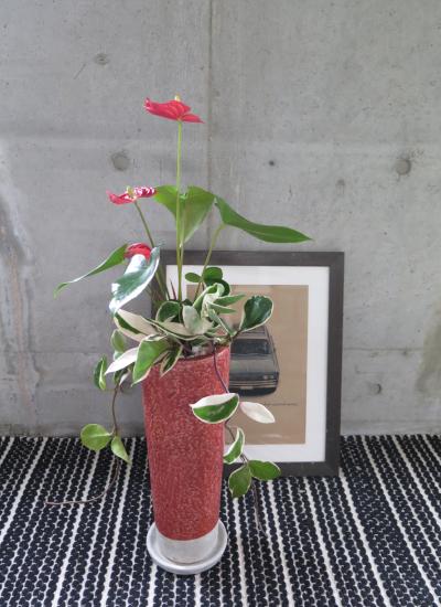 0455観葉植物ギフト アンスリュームとルビーポット