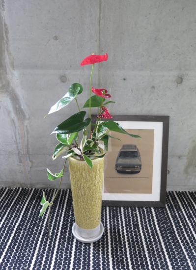 0456観葉植物ギフト アンスリュームとイエローポット