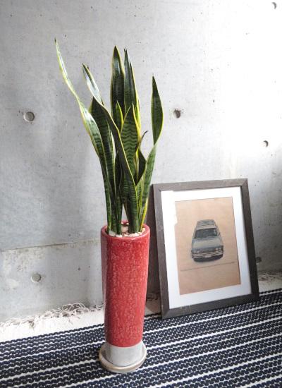 0474 観葉植物ギフト サンスベリアのスマートなオレンジレッド鉢