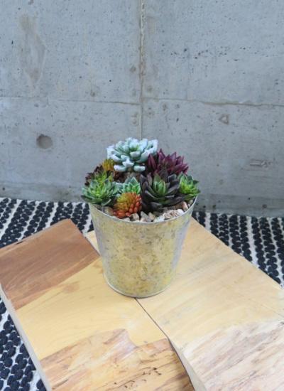 0485フェイクグリーン カラフル多肉植物のブリキポット(人工観葉植物)