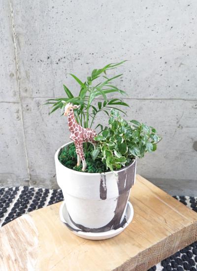 0487観葉植物ギフト キリンとミニ観葉のマーブル模様の樹脂ポット