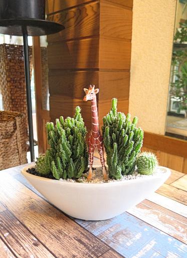 0503【アニマルガーデン】観葉植物ギフト キリンとセレウスサボテンSA05AW