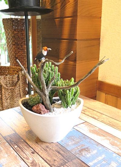 0508【アニマルガーデン】観葉植物ギフト 流木とオウムRSA06GW