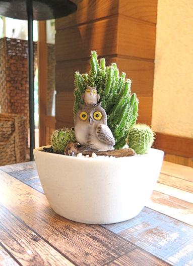 0512【アニマルガーデン】観葉植物ギフト フクロウとセレウスサボテンSA045W