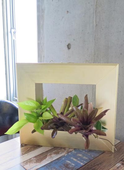 0534観葉植物ギフト 育てるプランツフレーム(ゴールド)