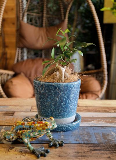 0536観葉植物ギフト 鉢と植物が選べる!私だけのミニグリーン【鉢色:ミッドナイトブルー】