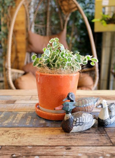 0537観葉植物ギフト 鉢と植物が選べる!私だけのミニグリーン【鉢色:オレンジ】