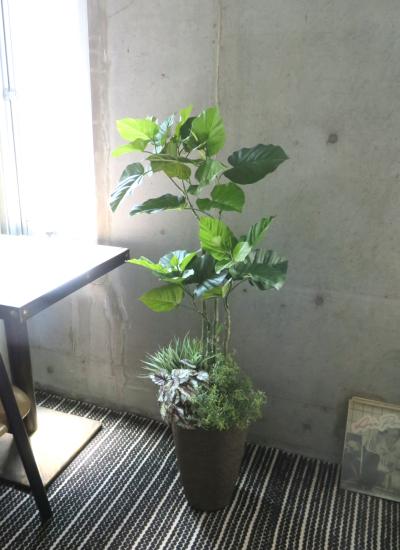 0573フェイクグリーン観葉植物ギフト ウンベラータ寄せ植え(軽量インテリア鉢使用)