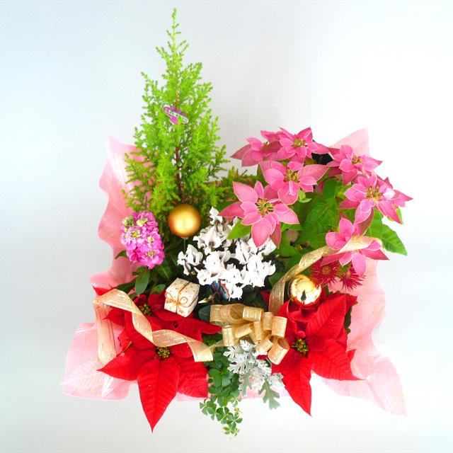 クリスマスの贈り物に♪【送料無料】~Merry X'mas!ポインセチア入りバスケットアレンジB~