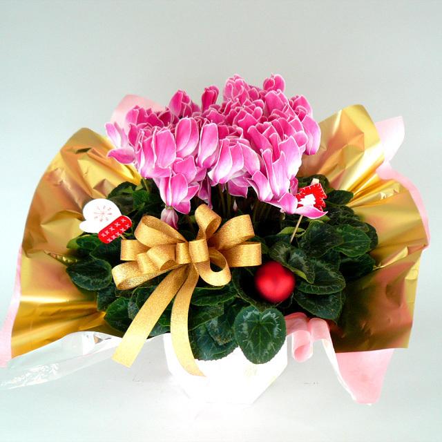 クリスマスや冬の贈り物に!【送料無料】~シクラメン・ラッピング~