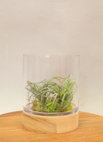 0588フェイクグリーン ガラス&ウッド エアプランツ