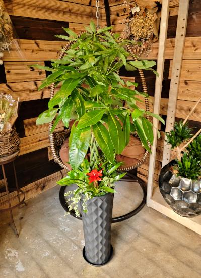 0583観葉植物ギフト パキラとダイヤブラック鉢 華やか寄せ植え【大型商品】