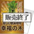 【パネもく!】癒しのインテリア観葉植物「幸福の木」(A4パネル付)[当日出荷可]