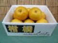 バイオ農法 河内晩柑(木成完熟)7〜8個 約3.5kg