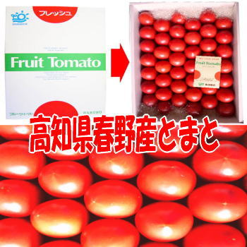 【送料無料】高知特産 フルーツトマト とまと 春野町産 40玉前後