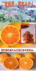 高知県山北産 温室みかん 2,5k ご家庭用