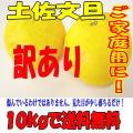 【送料無料】 高知特産 土佐文旦10kg ご家庭用 訳あり