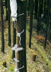 巴化成 木登りセット