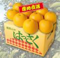 和歌山の美味しい八朔,おいしいハッサク