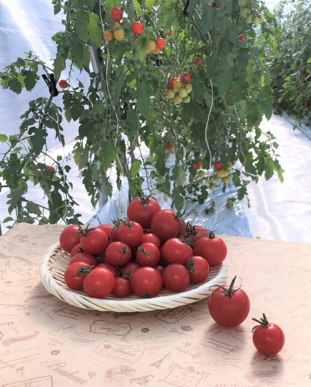 3種のトマト おためしセット