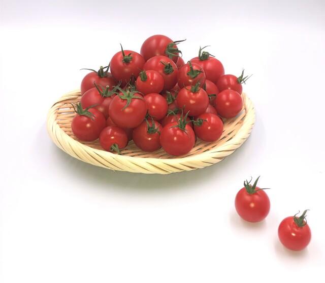 トマト 盛り合わせ写真