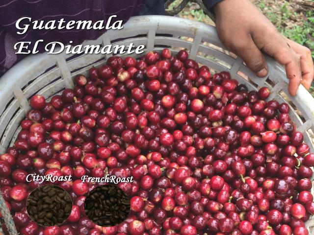 グァテマラ パカマラ