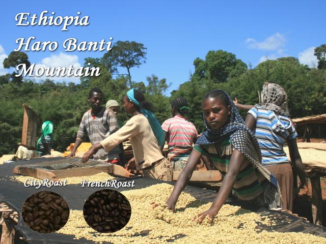エチオピア「イルガチェフェ」