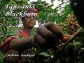 タンザニア「ブラックバーン農園」