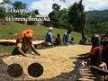 エチオピアコーヒー(モカ)