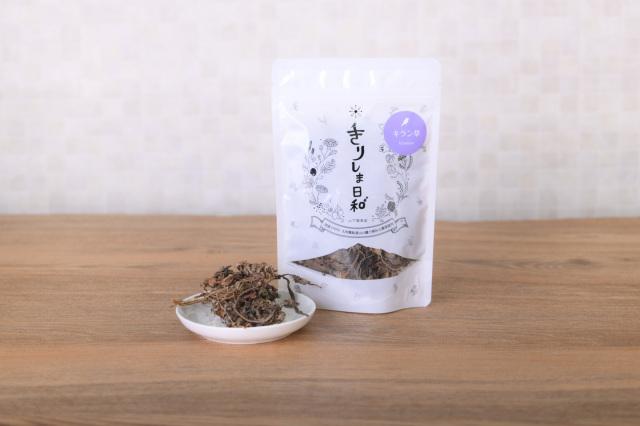 キラン草(小)