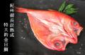 紀州備長炭干し  特大釣り金目鯛