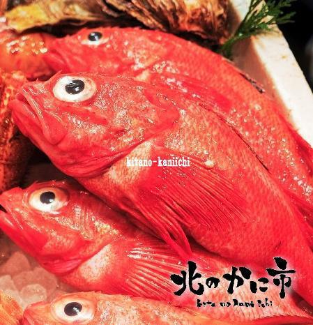 北海道極上釣りきんき(特大500g超)/尾)【2018 お祝いギフト推奨商品】