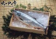 極上時鮭(ときしらず)半身1.6キロ前後【2018 お祝いグルメギフト推奨商品】