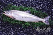 北海道産極上銀毛鮭(秋鮭)3.5キロ【2018 お祝いギフト推奨商品】