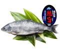 熟旨 塩紅鮭
