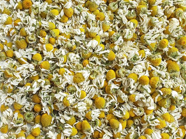 ハーブティー【ジャーマンカモミール】リーフL 北海道より減農薬有機肥料の国産ハーブのハーブティーをお届けします