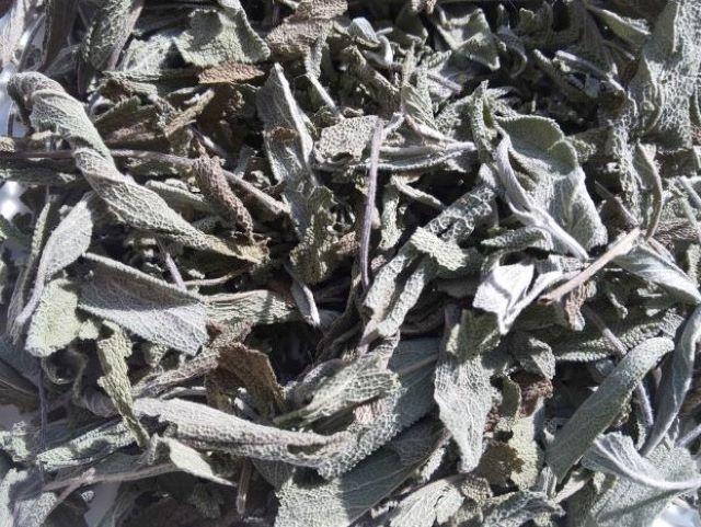 ハーブティー【セージ】リーフM 北海道より減農薬有機肥料の国産ハーブのハーブティーをお届けします