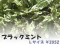 ハーブティー【ブラックミント】リーフL 北海道より減農薬有機肥料の国産ハーブのハーブティーをお届けします