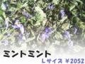 ハーブティー【ミントミント】リーフL 北海道より減農薬有機肥料の国産ハーブのハーブティーをお届けします